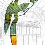 Pauciflora-porte-dauphine