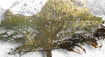 Quercus-cradle-mountain-500x198