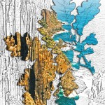 Quercus-cape-raoul